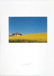 Campo di grano dietro casa